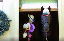 Velvet in barn with hat.jpg