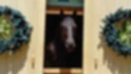 Velvet In Door.jpg