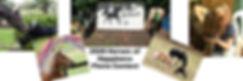 Team Velvet photo contest banner.jpg