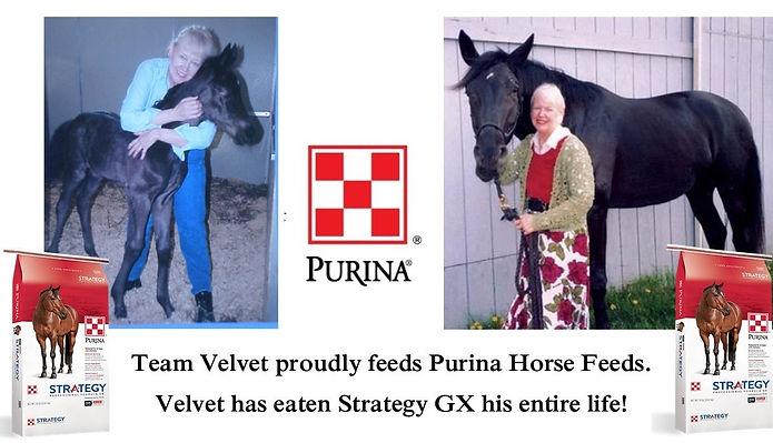 Strategy Promotion- Velvet.jpg