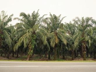 Km 19138 - Km 19658_Pantai Cenang - Kuala Lumpur