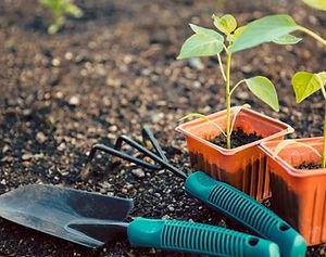 Soft landscaping, planting, garden beds, vegetable gardens, irrigation