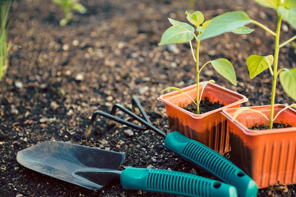 30 min of activity each day will reduce the stress hormone (cortisol), even if it is as simple as gardening.
