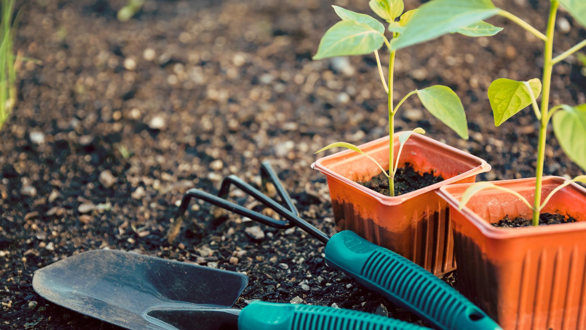 Growing the Garden Program