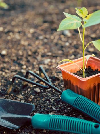Garden Maintenance/ Planning