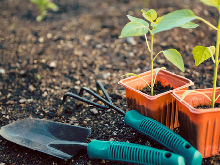Tips for the Beginner Gardener