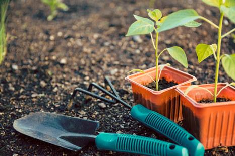 7 Tips for Gardening