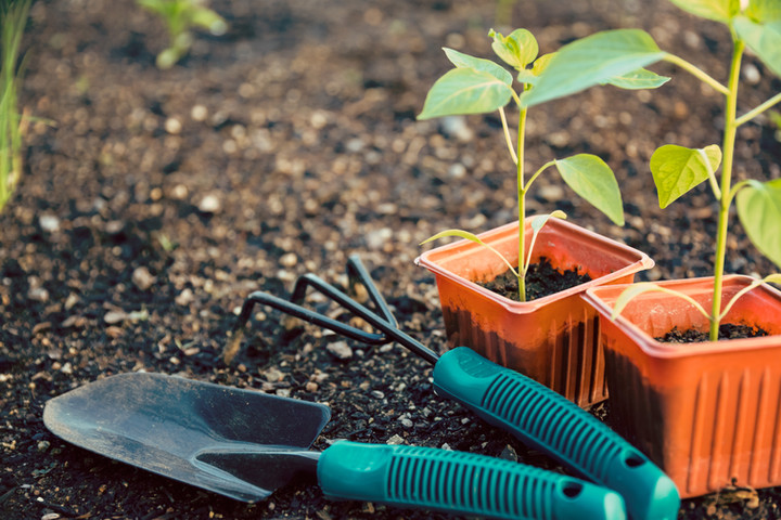 Free Seedlings for Cheatham Residents