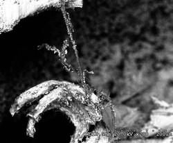 Claw shaped Bone and Fibers