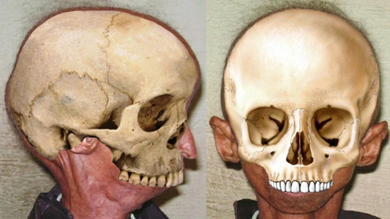 Human skull fits