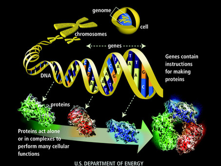 New Type Of DNA Test Based On Proteins