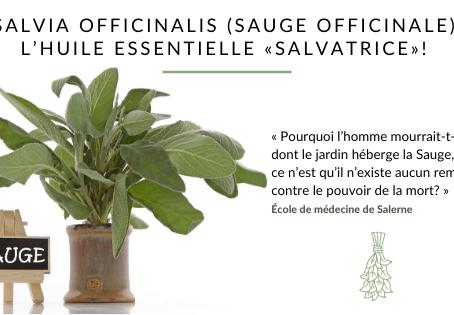 Salvia officinalis (sauge officinale), l'huile essentielle « salvatrice »!