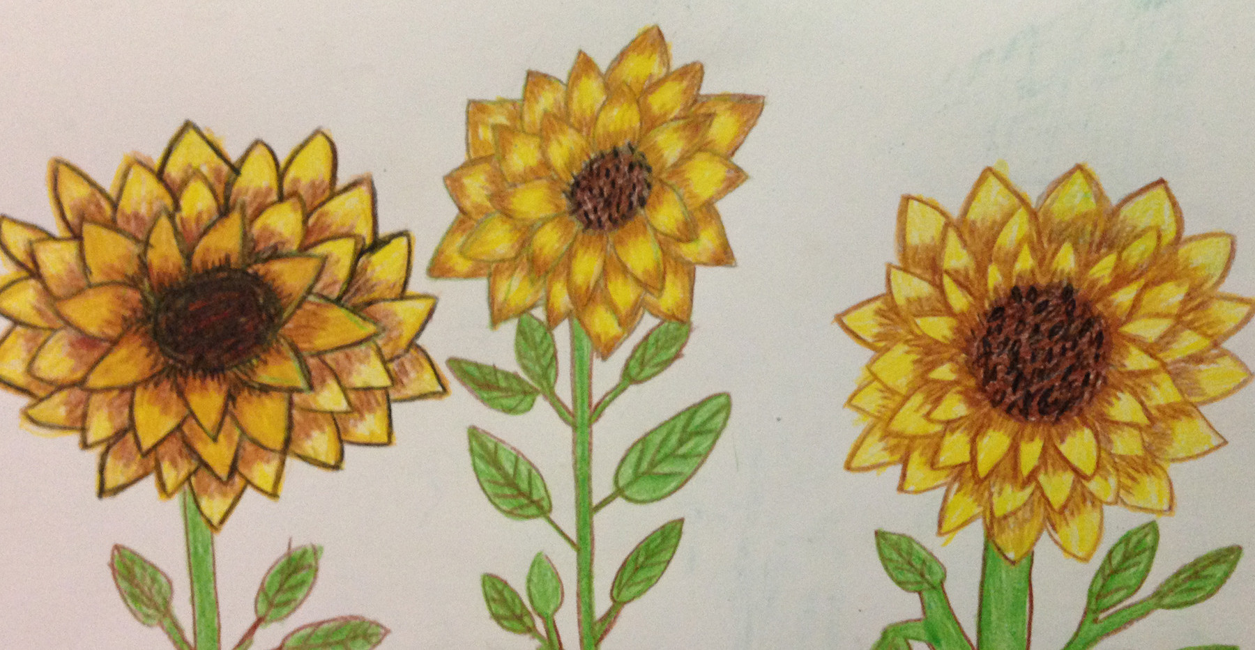Zeyneb Johnson- Sunflowers