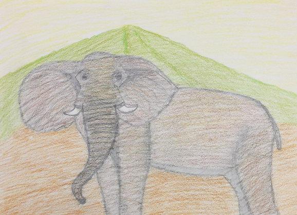 """Zeyneb Johnson- """"Bull Elephant"""""""
