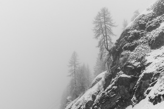Steep mountain slope, trees in the fog, black and white