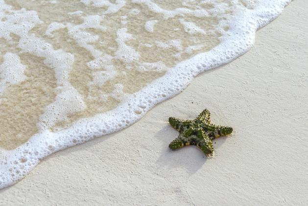 Star fish on the sand, making its way into the water, beach on the island of New Providence