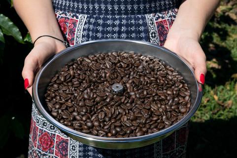 Tray of freshly roasted Arabica coffee beans at Finca Casanga specialty coffee farm
