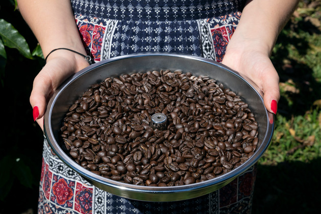 Tray of freshly roasted Arabica coffee beans at Finca Casanga specialty coffee farm