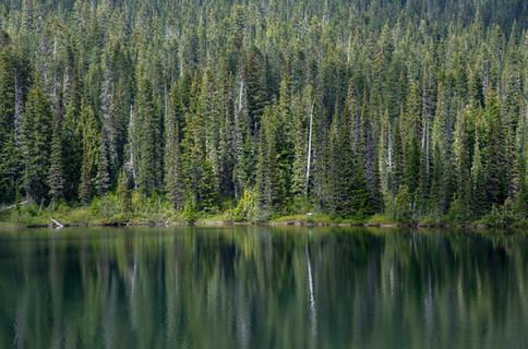 Evergreen reflection in Mount Rainier National Park