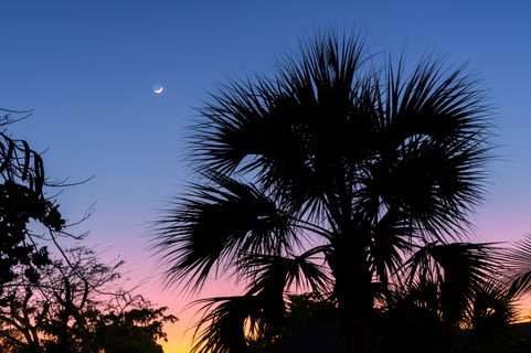 Palm tree silhouettes on a clear evening sky, with a crescent moon above