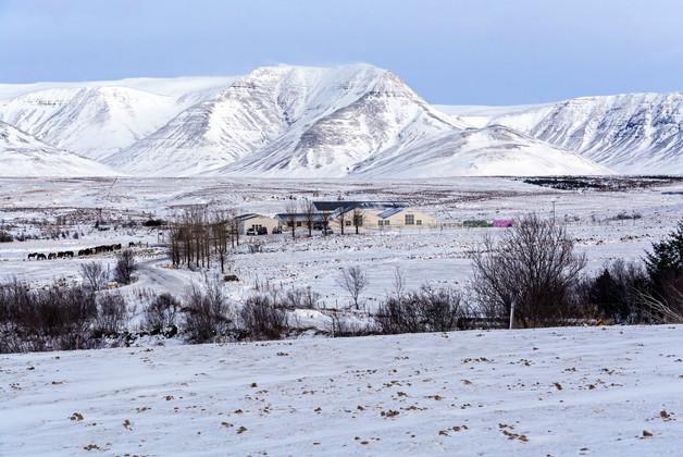 Icelandic farm in the winter