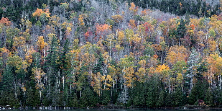 Fall folliage in the High Peaks Wilderness area of the Adirondack Mountains