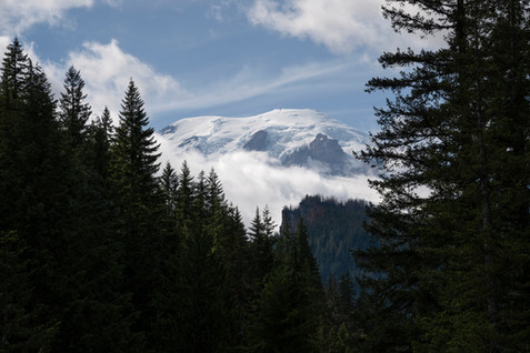 Snowy peak of Mount Rainier among evergreen trees, Washington