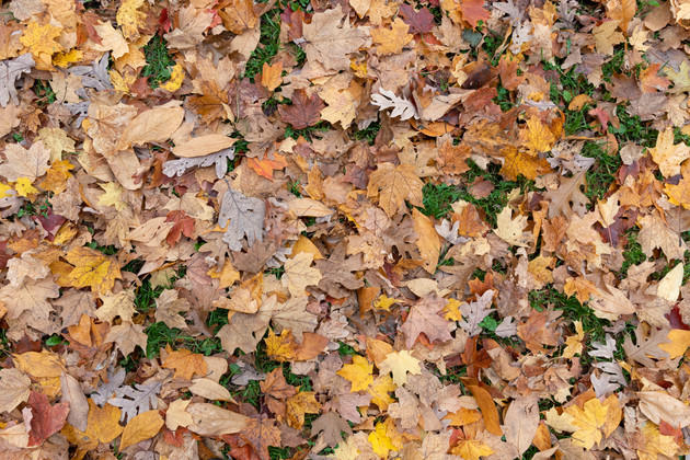 Fall leaves on the ground in Toronto's High Park