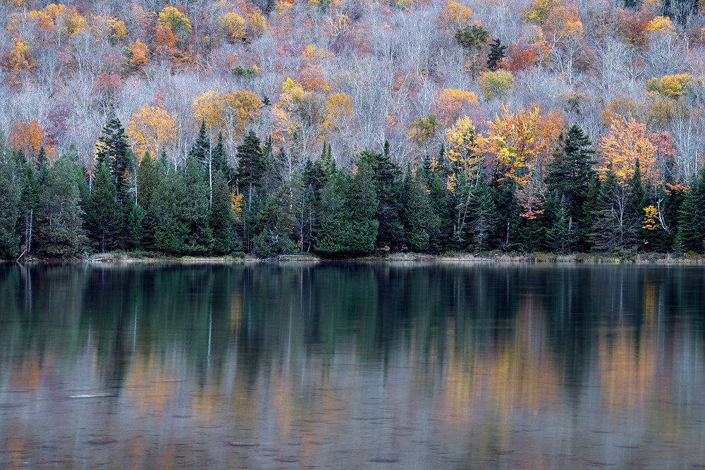 Shore of Heart Lake in the High Peaks Wilderness area of the Adirondack Mountains (New York State) in the fall (autumn). Evergreen trees at the edge of the water, colorful foliage behind them.