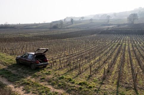Vineyard fields in Burgundy, just north of the Rhône-Alpes region