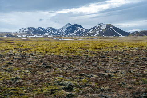 Scenic moss field and mountain view in Iceland