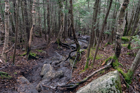 On the ascent to Wright Peak in the Adirondack Mountains