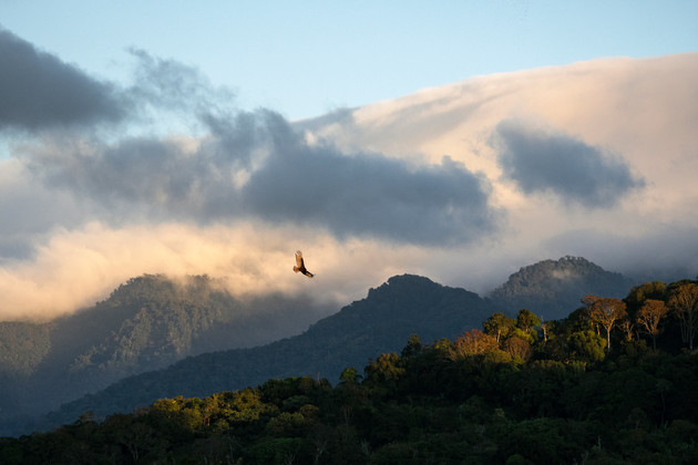 Eagle soaring over the rainforest covered hills near Volcan Baru, Chiriqui province