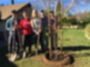 Ojai Trees - Brain, Tara, Anna, Chris, L