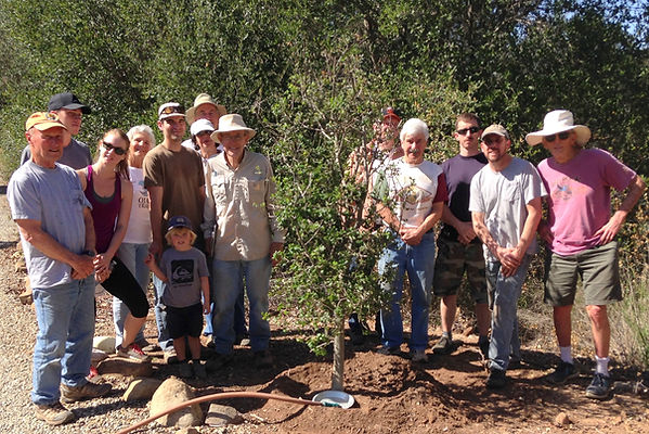 ojai trees group planting picture spring