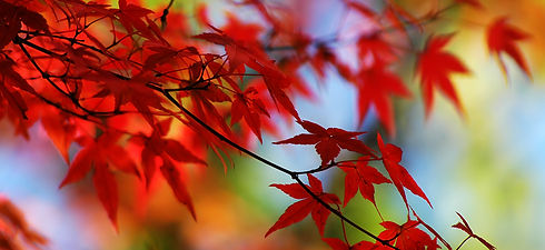 Home Base - Background - Red - Fall Mapl