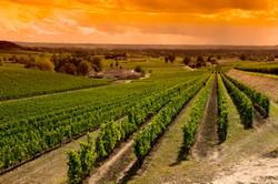 Bordelais Vineyard