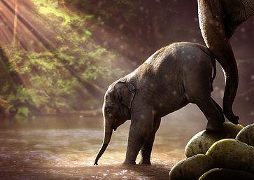 elephant-2380009__480.jpg