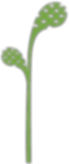 DCCDC_Flower_Bulb.png