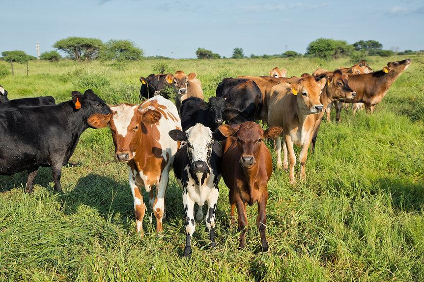 Herd 2017.02.03 b.jpg