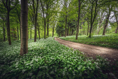 SL8_Dorset Garlic Woods
