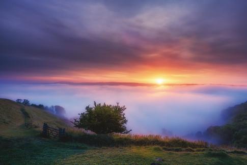 SL1_Hambledon Hill Misty Sunrise