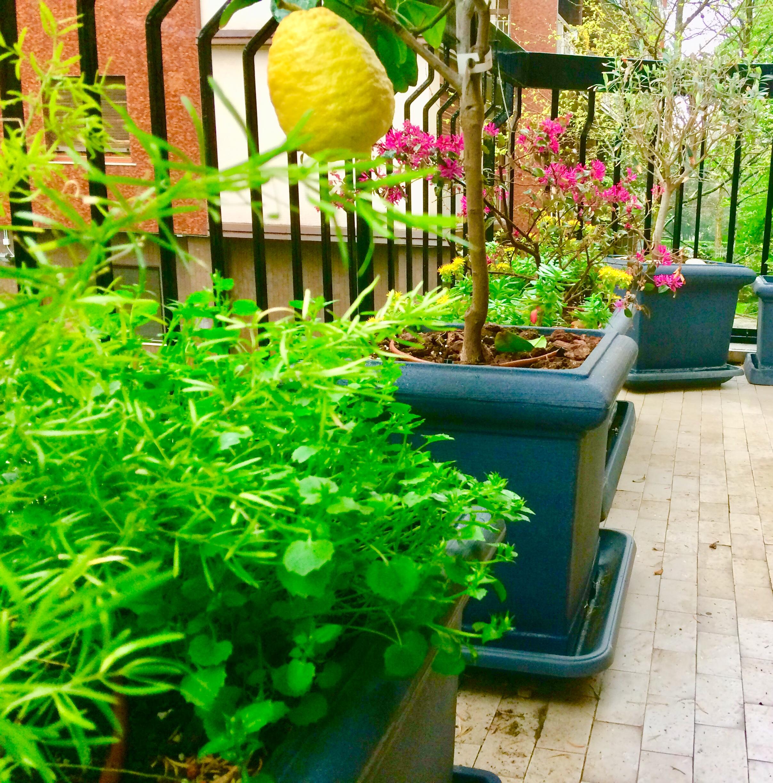 Manutenzione Giardini Milano E Provincia giardiniere milano la selva giardini progettazione terrazze