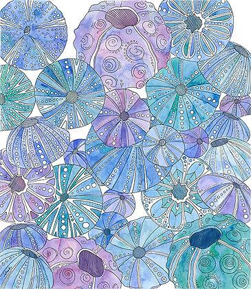 Aguas Urchins 1