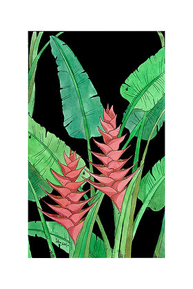 Heliconia (Size: A3)