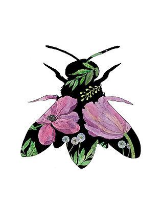 Pink Cicada