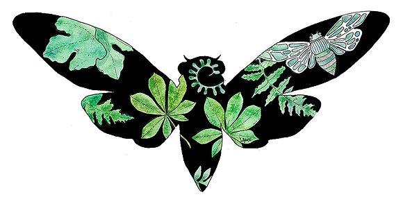 Cicada Silhouette (Size: A4)