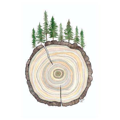 Manali Tree Ring