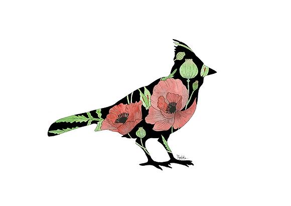 Poppy Cardinal