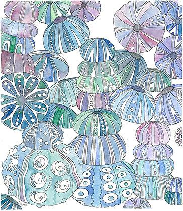 Aguas Urchins 2
